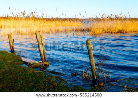 Three old wooden mooring poles in shoreline with reed bed in background.