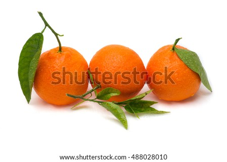 Three orange tangerine citrus fruits with green leaves in a row or line isolated against white textured background