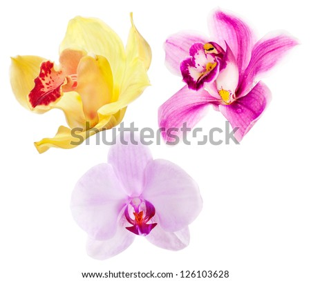 three orchid flowers isolated on white background - stock photo