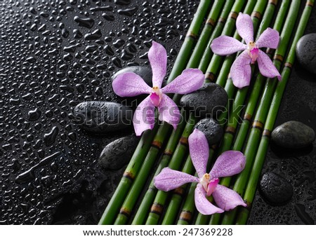 Three orchid with black stones on bamboo grove on wet  - stock photo