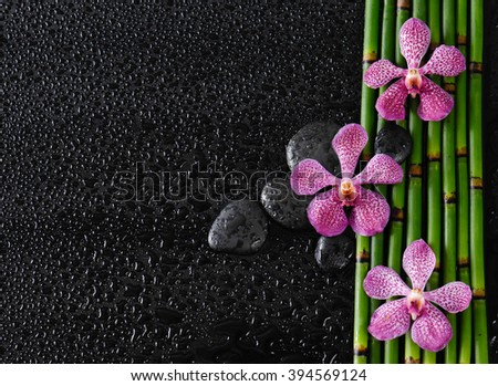 Three orchid with stones on bamboo grove-wet background  - stock photo