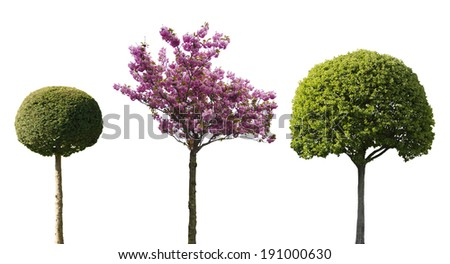three ornamental trees isolated on white background - stock photo