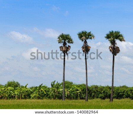 Three palm trees in the field - stock photo