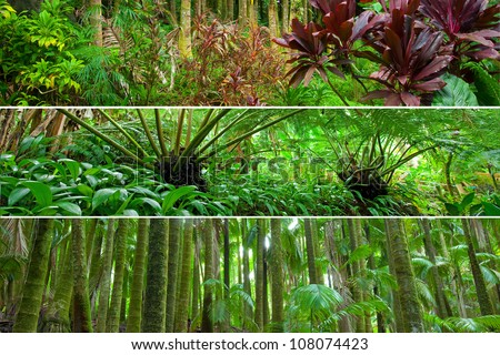 Three panorama scenes from different tropical rain forests: various leafy tropical plants, fern and palm forests