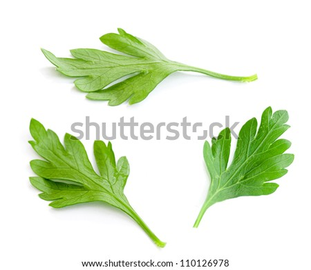 Three parsley leaves isolated on white - stock photo