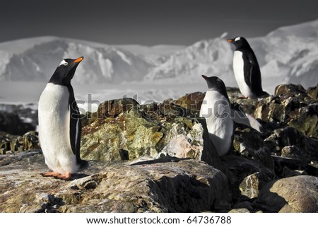 Three penguins dreaming sitting on a rock, mountains in the background - stock photo