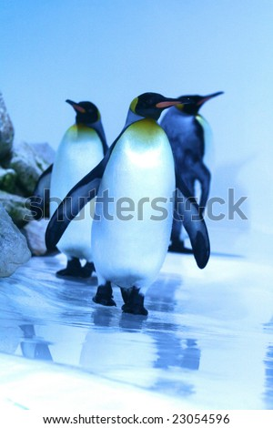 three penguins emperors who walk - stock photo