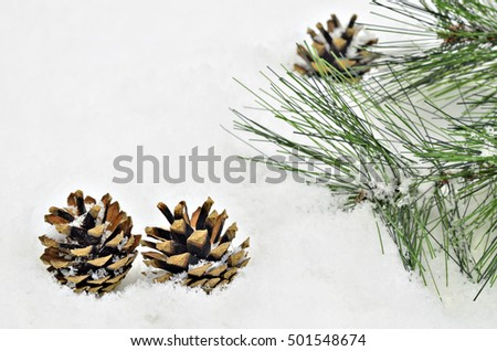 three pine cones and fir sprigs on snow background, close up, space for text, horizontal / Pine cones and Fir sprigs on Snow