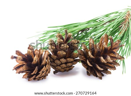 Three pine cones isolated on a white background - stock photo