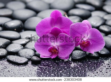 Three pink orchid on zen pebbles on wet background - stock photo