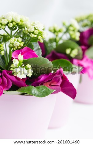 Three pink pots of white kalanchoe with decorative artificial blooms - stock photo