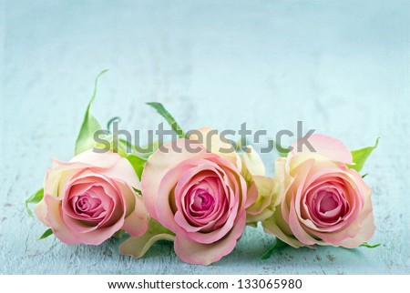 Three pink roses on light blue wooden shabby chic background with copy space - stock photo