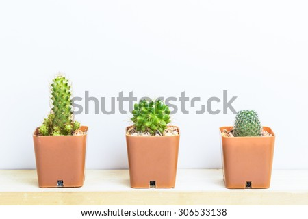 Three potted cactus on white background