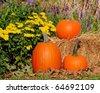 Three Pumpkins - stock photo