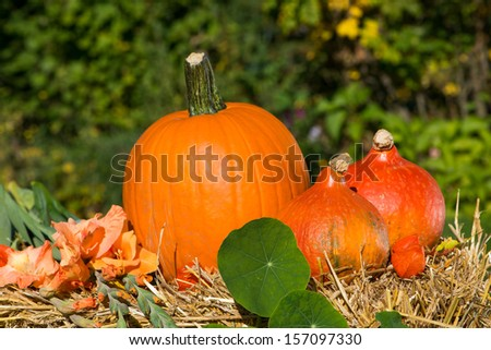 Three pumpkins decorated on straw