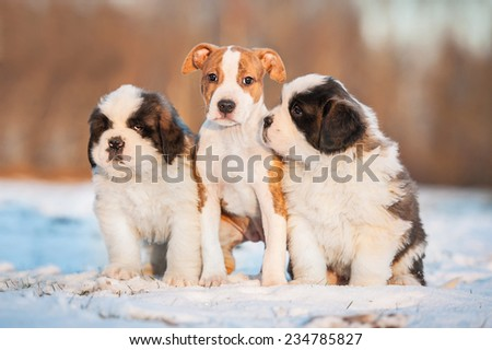 Three puppies sitting on the snow in winter