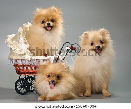 Three puppies with a sidecar in studio