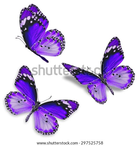 Three purple butterfly isolated on white background - stock photo