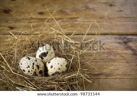 Three quail eggs in the nest - stock photo