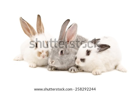 Three rabbit sitting together isolated on white background - stock photo