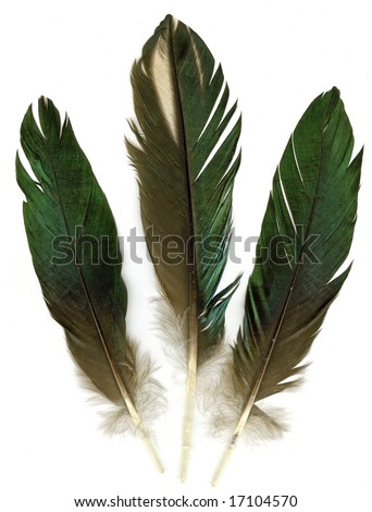 Raven Feather Vector