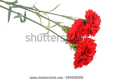 Three red cloves isolated on white - stock photo