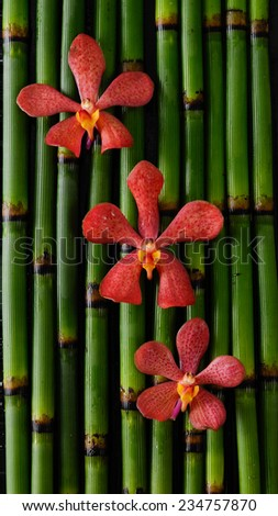 Three red orchid flower and bamboo grove background  - stock photo