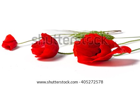 three red poppies with ear of corn - stock photo