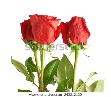Three red roses composition isolated over the white background