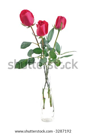 Three red roses in glass pot Isolated on withe background . - stock photo