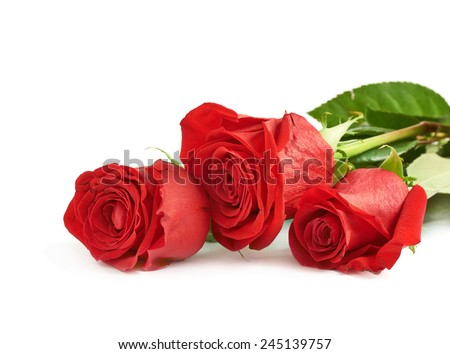 Three red roses isolated over the white surface