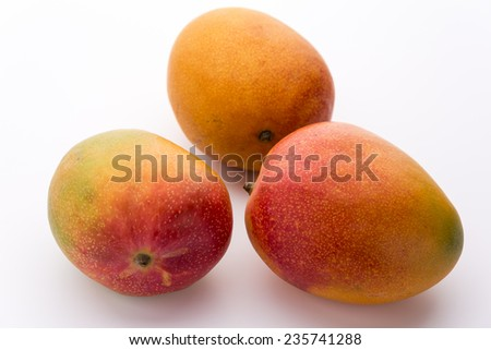 Three ripe mangos, Mangifera indica, with impeccable skin. Only a few tiny dark spots do indicate that this sweet tropical fruit is ready to eat. Colors ranging from green, yellow and orange to red. - stock photo
