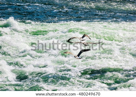 Three river gulls flying over river rapids