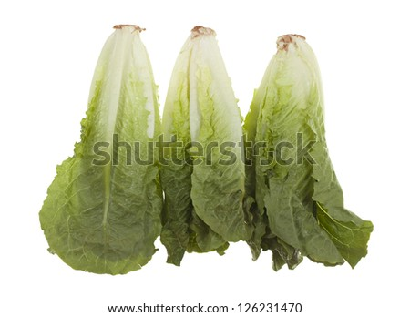 Three romaine hearts; isolated on white background