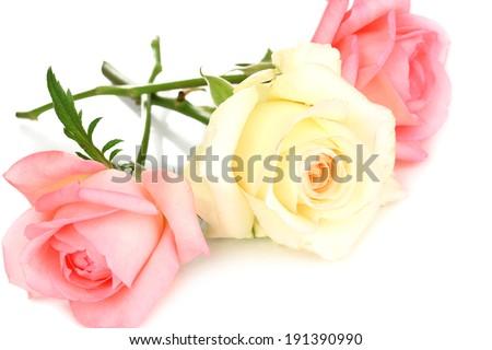 Three roses isolated on white - stock photo