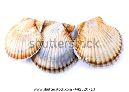 Three scallops