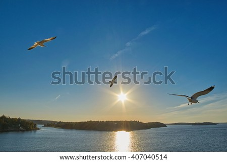 Three Sea Gulls flying over sea, islands and forest - stock photo