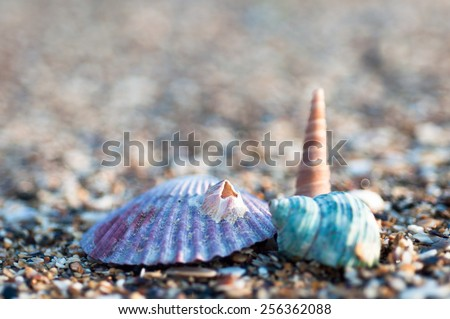Three sea shell's on the beach - stock photo