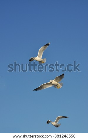 Three seagulls flying against blue sky - stock photo
