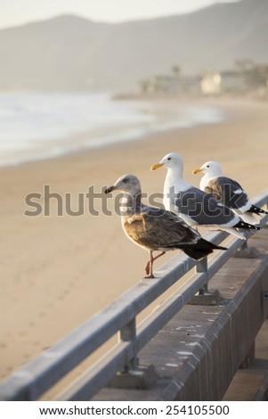 three seagulls sitting on railing by the beach - stock photo