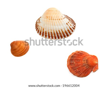 Three seashells isolated on white background - stock photo