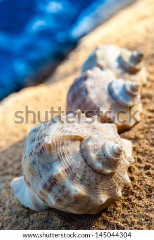 three seashells on sandy beach in cool shade - stock photo
