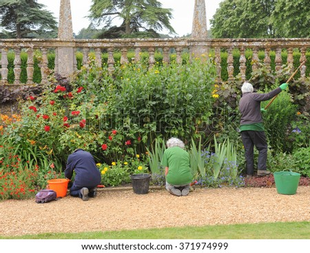 Three Senior Female Gardeners Weeding Flowerbed Stock Photo (Royalty ...