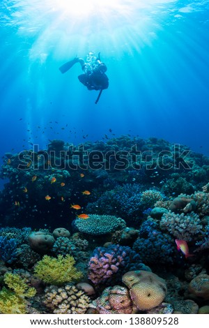 Three silhouettes of Scuba Divers swimming next to the live coral reef full of fish. / Scuba Diving - stock photo