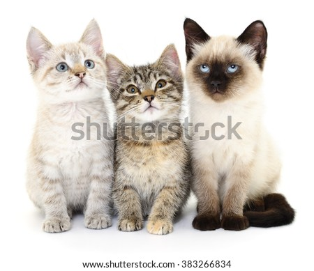 Three small kittens on a white background.  - stock photo