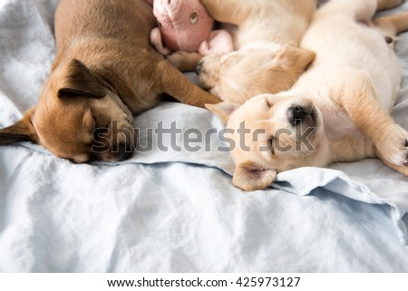 Sleeping Puppy Stock Images RoyaltyFree Images Vectors - Puppies sleeping
