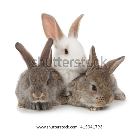 three small rabbit on a white background.