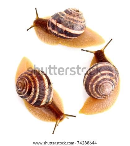 Three snails isolated on white - stock photo