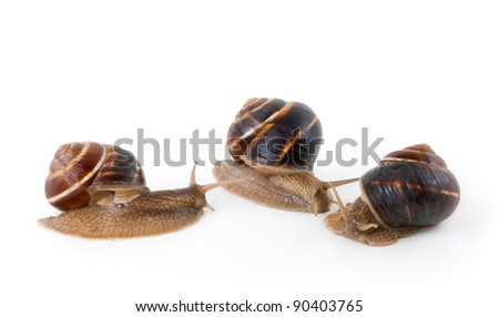 Three snails on a white background