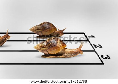 Three snails racing on grey background with shadow, Business competition concept - stock photo